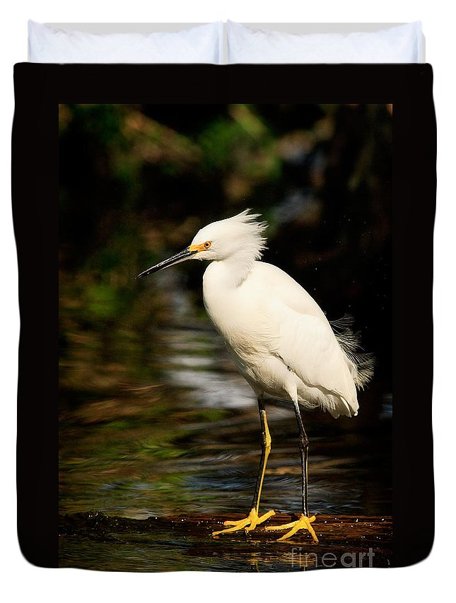 Immature Snowy Egret Duvet Cover featuring the photograph Immature Snowy Egret by Matt Suess
