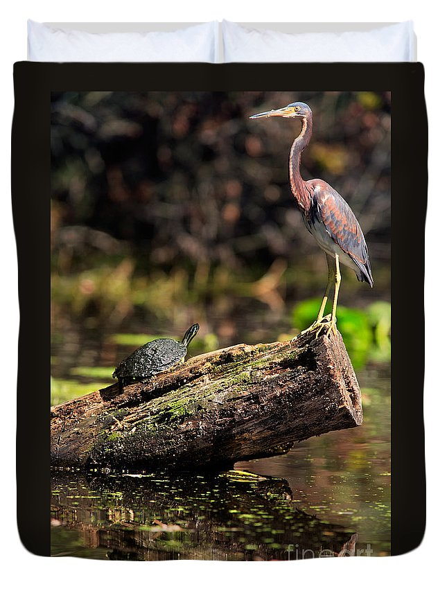 Immature Duvet Cover featuring the photograph Immature Tri-colored Heron And Peninsula Cooter Turtle by Matt Suess