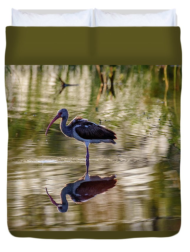 Birds Of South Texas Duvet Cover featuring the photograph Immature White Ibis At Sunrise by Debra Martz