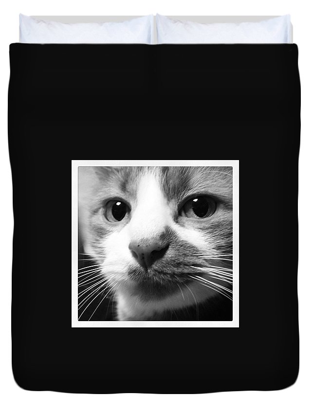 Cat Duvet Cover featuring the photograph Impressive Kitty by Maria Malayter
