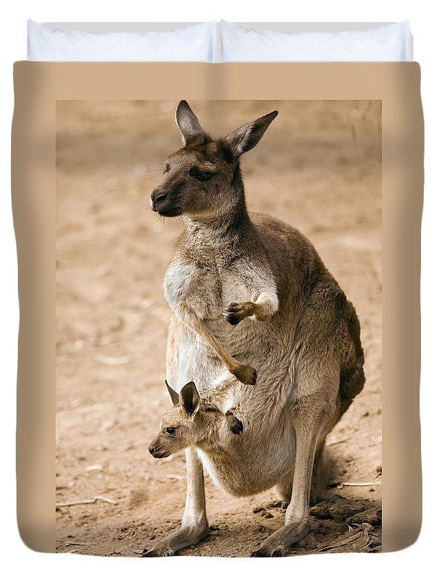Kangaroo Duvet Cover featuring the photograph In Mother's Care by Mike Dawson