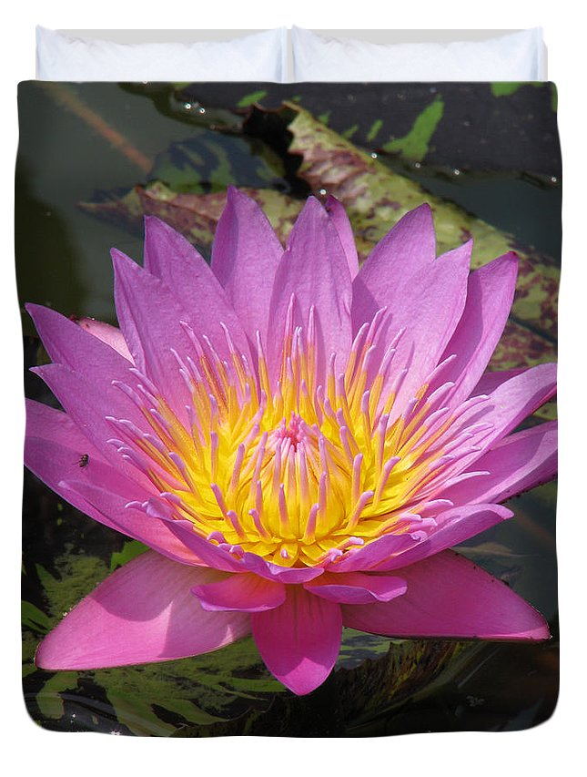 Lotus Duvet Cover featuring the photograph In Position by Amanda Barcon