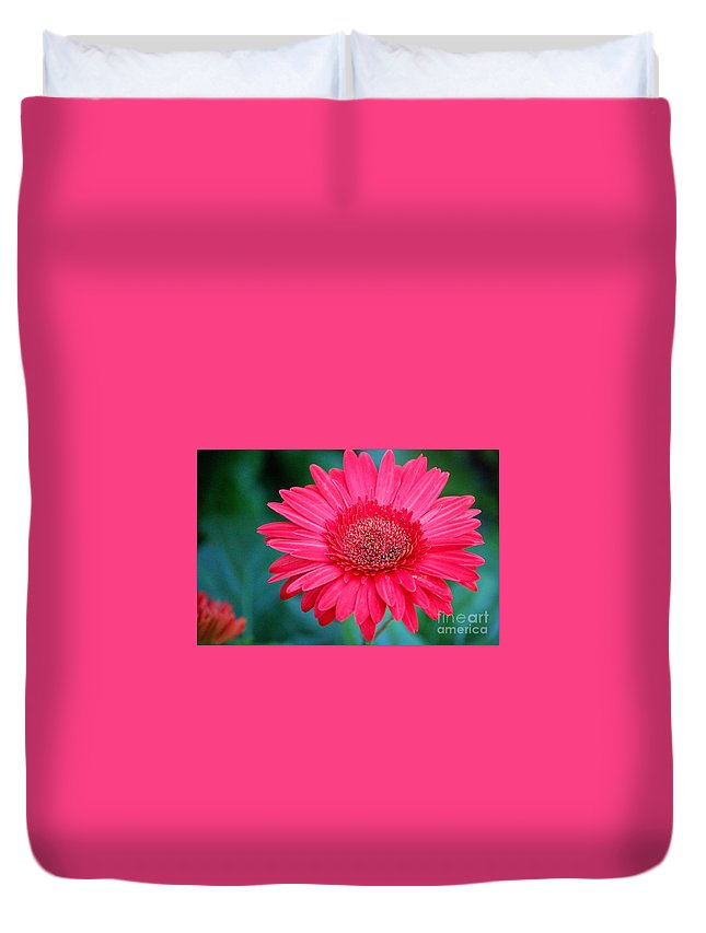 Gerber Daisy Duvet Cover featuring the photograph In The Pink by Debbi Granruth