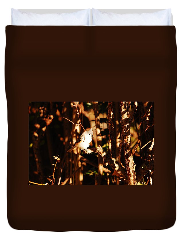 Titmouse Duvet Cover featuring the photograph In The Sunlight by Lori Tambakis