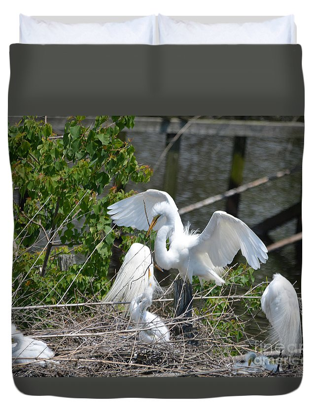 Lake Duvet Cover featuring the photograph In The Wild White Snowy Egrets Photography ....photo A by Barb Dalton