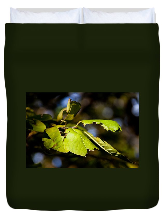 Leaf Duvet Cover featuring the photograph In The Woods by Bob Mintie
