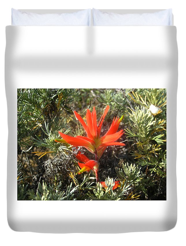 Wildflower Duvet Cover featuring the photograph Indian Paintbrush And California Sage by Andrea Freeman
