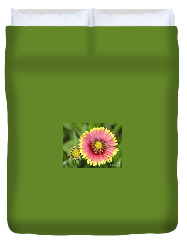 Indian Paintbrush Duvet Cover featuring the photograph Indian Paintbrush by David Lee Thompson