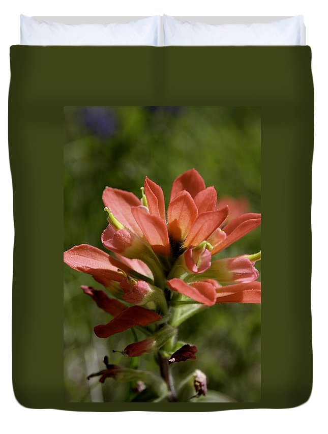 Flower Duvet Cover featuring the photograph Indian Paintbrush by Melissa Millsap-Young