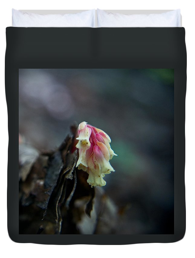 Cove Duvet Cover featuring the photograph Indian Pipe 2 by Douglas Barnett