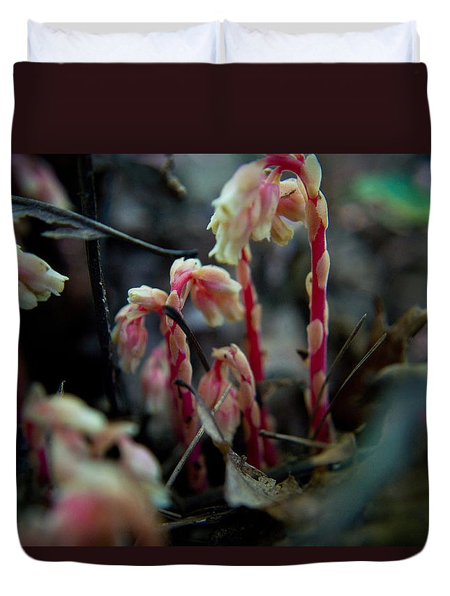 Duvet Cover featuring the photograph Indian Pipe 5 by Douglas Barnett