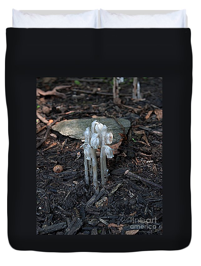 Mushrooms Duvet Cover featuring the photograph Indian Pipes by Robert Sander