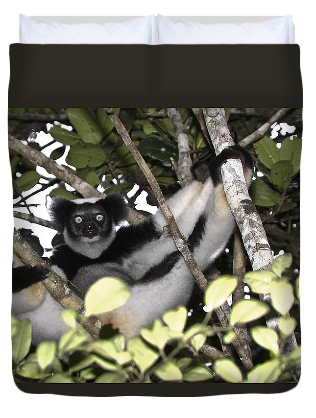 Madagascar Duvet Cover featuring the photograph Indri Indri by Michele Burgess