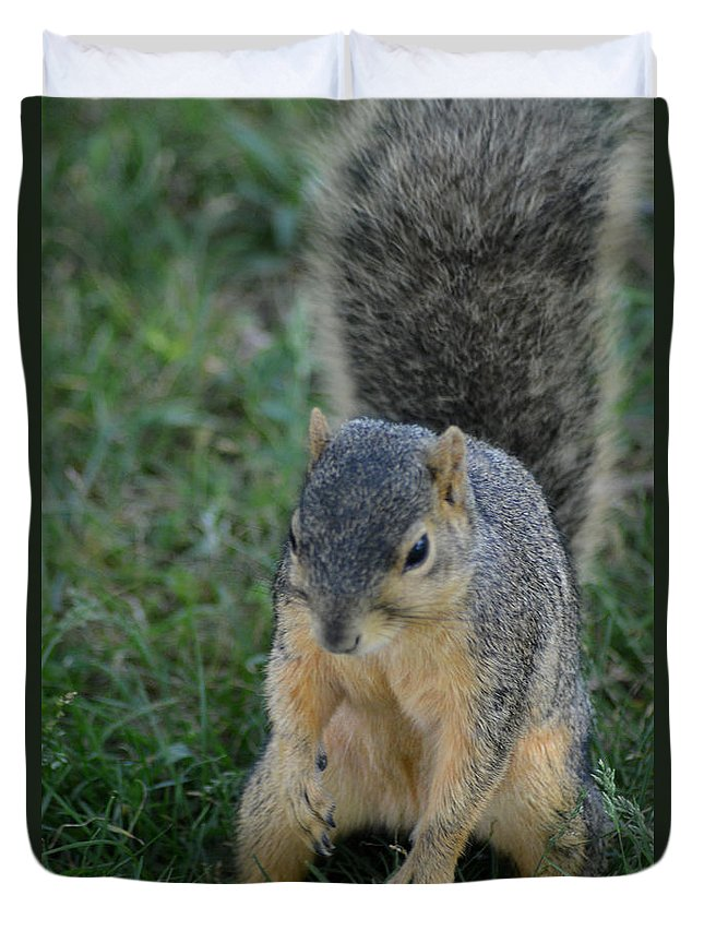 Squirrel Duvet Cover featuring the photograph Inquisitive Squirrel by Belinda Stucki