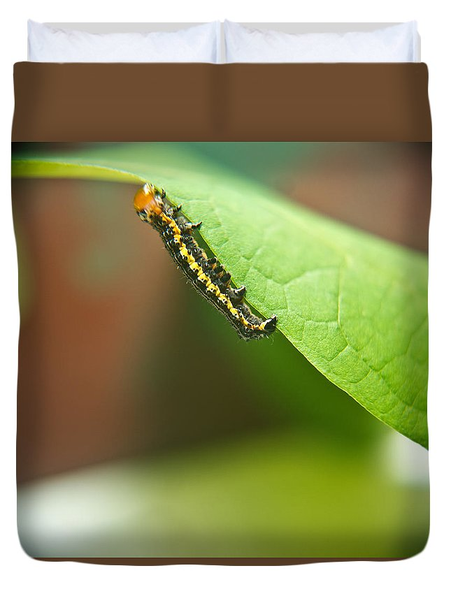 Cove Duvet Cover featuring the photograph Insect Larva 2 by Douglas Barnett