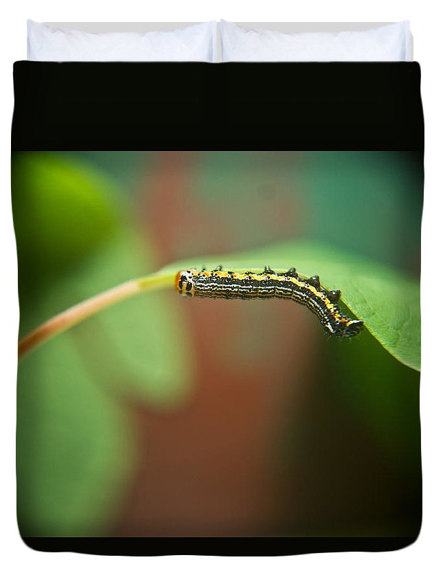Cove Duvet Cover featuring the photograph Insect Larva 4 by Douglas Barnett