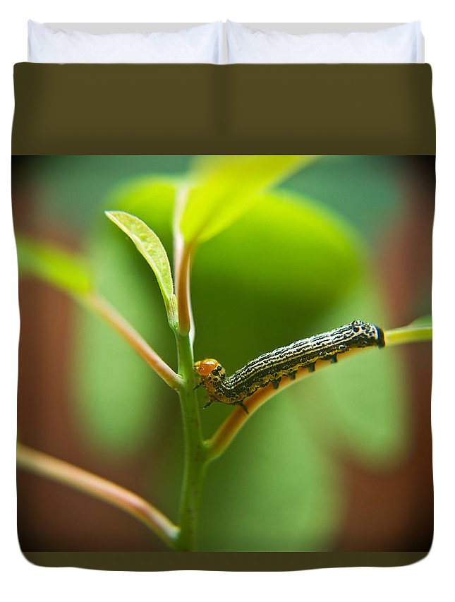 Cove Duvet Cover featuring the photograph Insect Larva 5 by Douglas Barnett