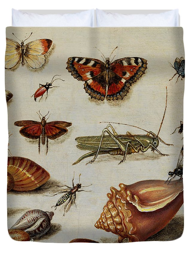 Jan Duvet Cover featuring the painting Insects, Shells And Butterflies by Jan van Kessel