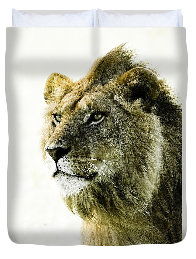 Lion Duvet Cover featuring the photograph Intensity by Michele Burgess