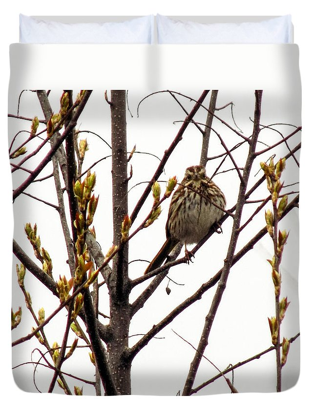Bird Duvet Cover featuring the photograph Intent Look by William Tasker