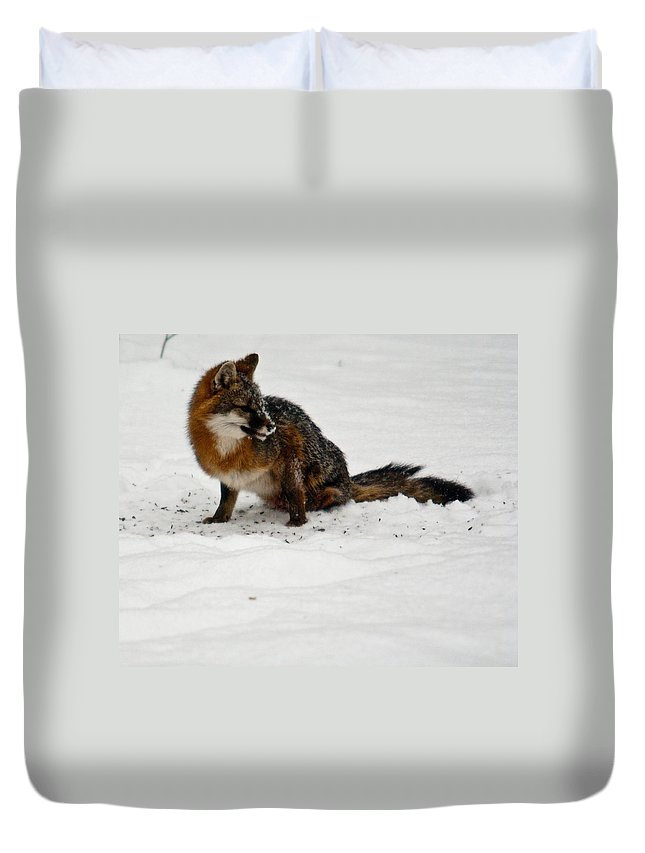 Fox Duvet Cover featuring the photograph Intent Red Fox by Douglas Barnett