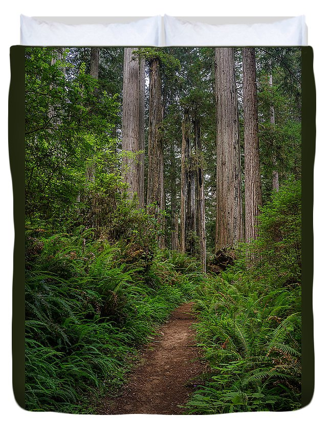 Redwoods Duvet Cover featuring the photograph Into The Redwoods by Greg Nyquist