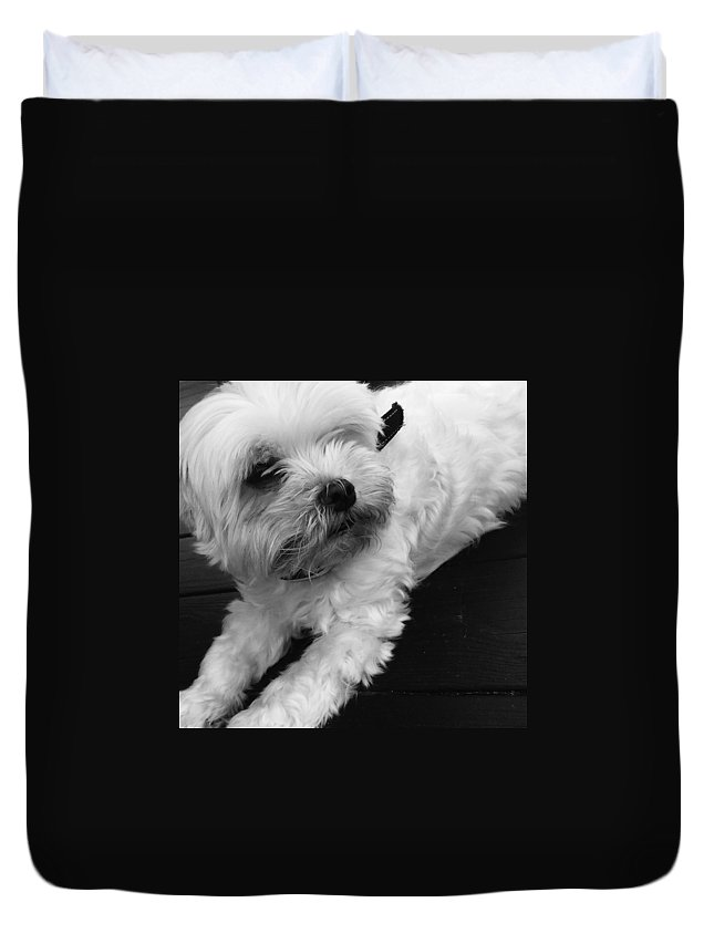 My Dog Ira Duvet Cover featuring the photograph Ira Missed Mommy by Monica Sassano