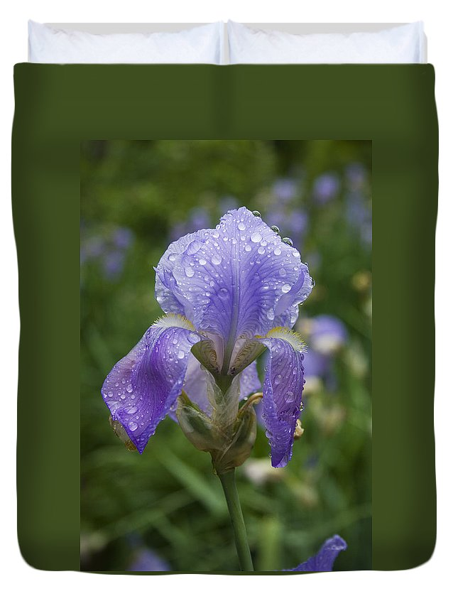 Iris Flower Blue Purple Green Rain Wet Drop Water Droplet Nature Garden Duvet Cover featuring the photograph Iris After Rain by Andrei Shliakhau