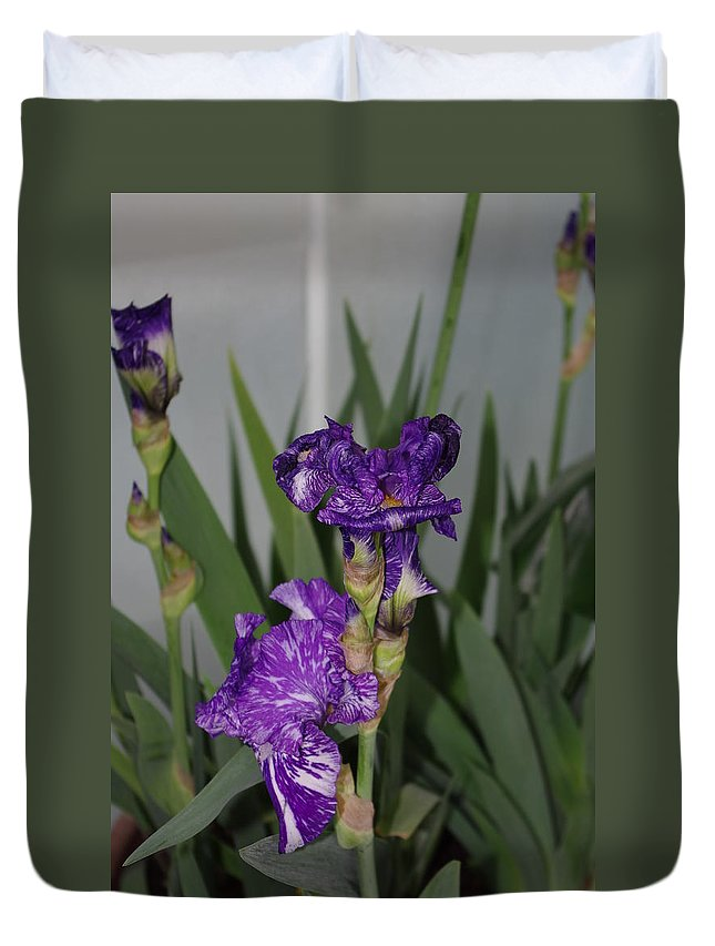 Dark Purple Iris Duvet Cover featuring the photograph Iris by Alice Markham