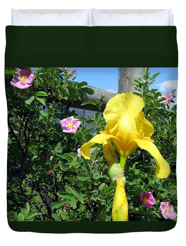 Iris Duvet Cover featuring the photograph Iris And Wild Roses by Will Borden