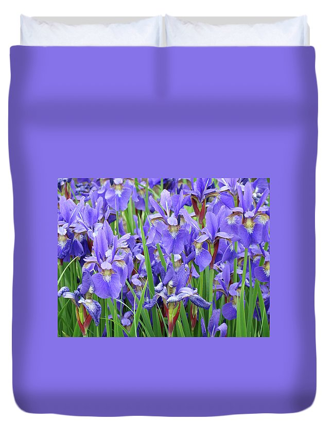 �irises Artwork� Duvet Cover featuring the photograph Iris Flowers Artwork Purple Irises 9 Botanical Garden Floral Art Baslee Troutman by Baslee Troutman