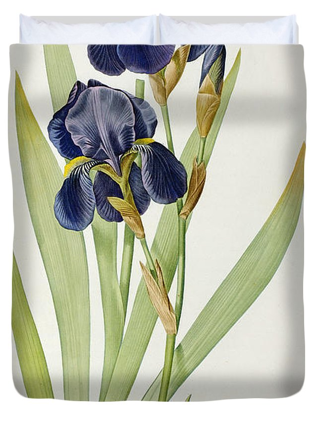 Iris Duvet Cover featuring the painting Iris Germanica by Pierre Joseph Redoute