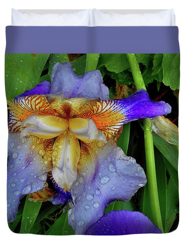 Still Life Duvet Cover featuring the photograph Iris Rain Blue by Mark Victors
