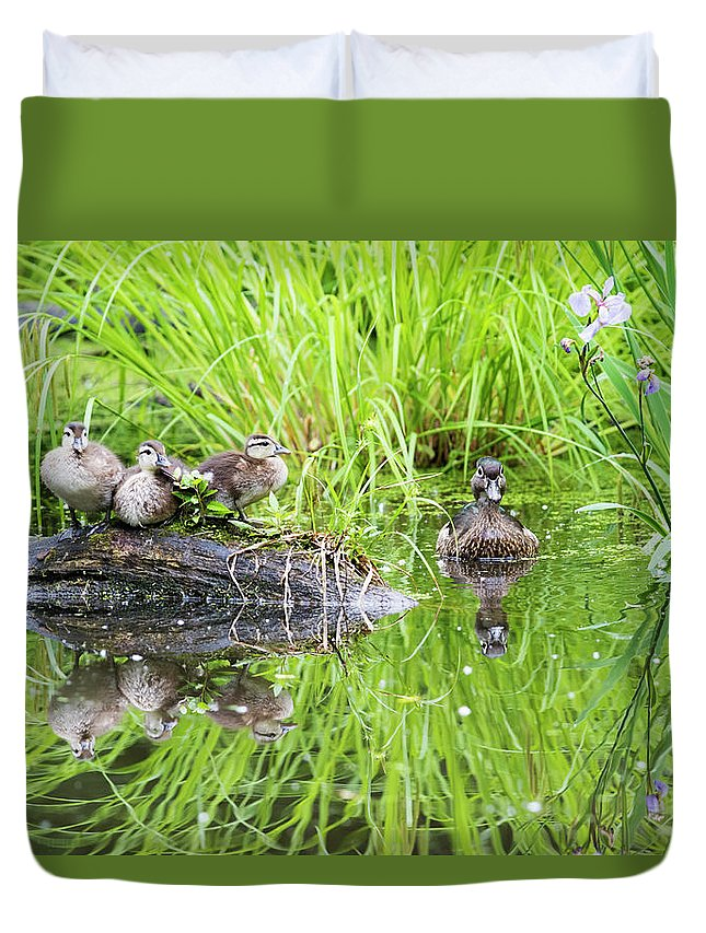 Babies Duvet Cover featuring the photograph Iris Versicolor And Wood Duck Family by Mircea Costina Photography