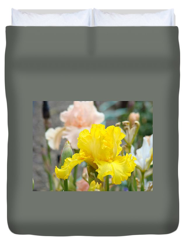 �irises Artwork� Duvet Cover featuring the photograph Irises Botanical Garden Yellow Iris Flowers Giclee Art Prints Baslee Troutman by Baslee Troutman
