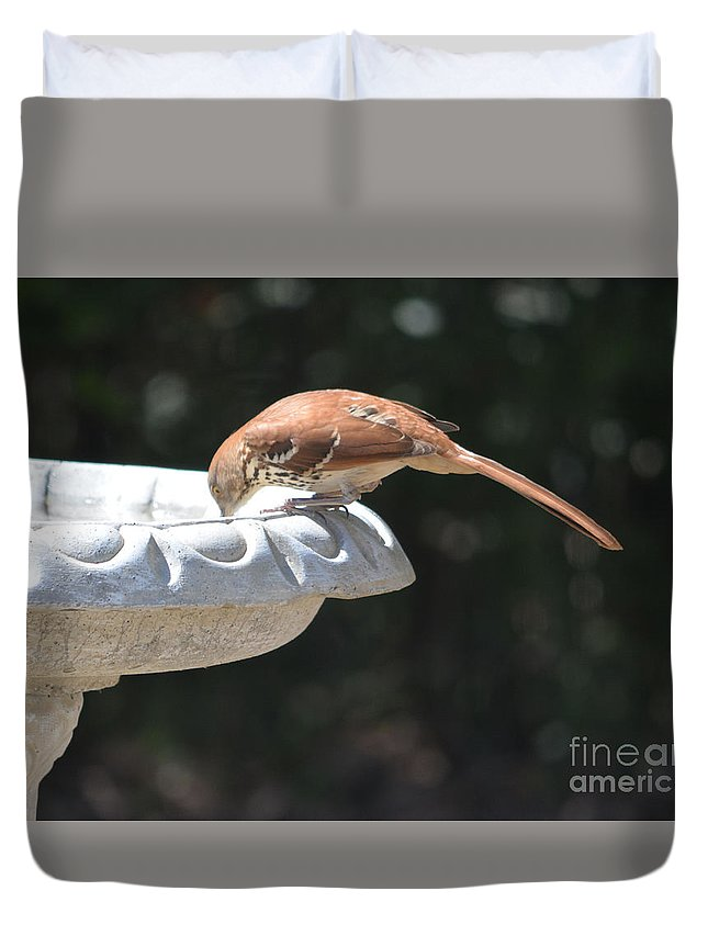 Is It Almost Empty Print Duvet Cover featuring the photograph Is It Almost Empty by Ruth Housley