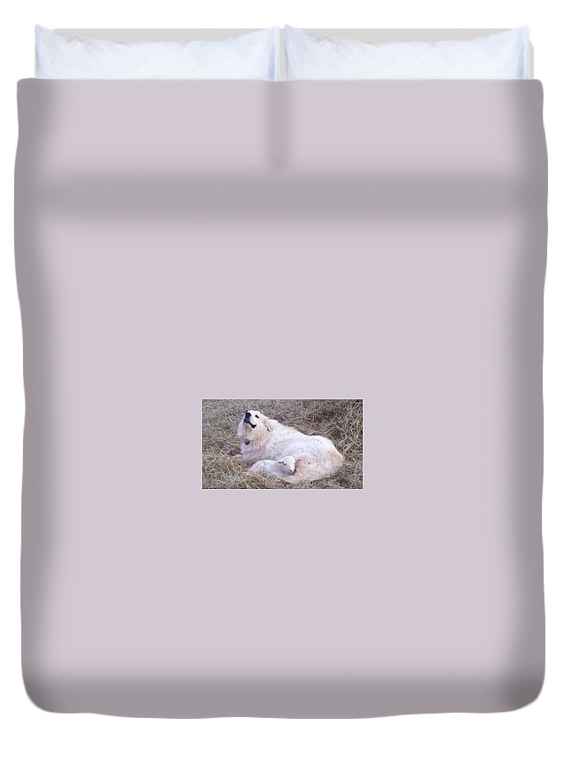 Great Pyrenees Dog Duvet Cover featuring the photograph Isabel and Molly 2 by Ginger Concepcion