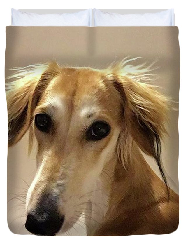 Dogsofinstagram Duvet Cover featuring the photograph It Looks Like It Will Be A Bad Hair Day by John Edwards