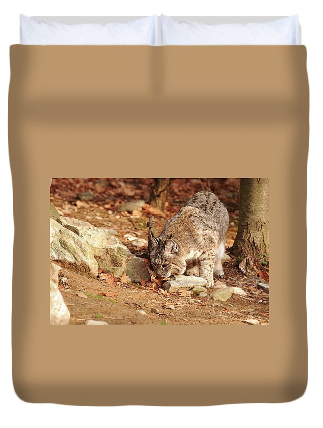 Bobcat Duvet Cover featuring the photograph It Was Here by Lori Tambakis