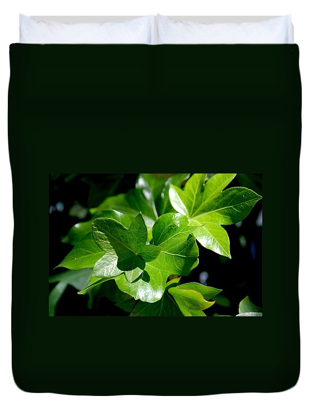 Photography Duvet Cover featuring the photograph Ivy In Sunlight by Susanne Van Hulst