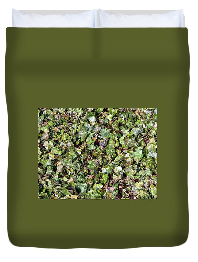Ivy Duvet Cover featuring the photograph Ivy Ivy Ivy by Olivier Le Queinec