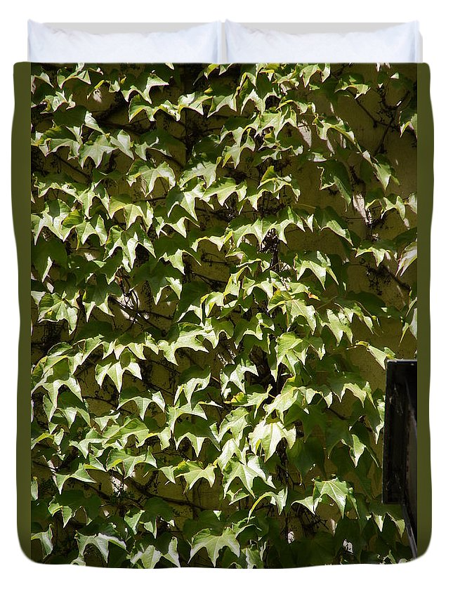 Ivy Duvet Cover featuring the photograph Ivy Sunlight by Ron Koivisto