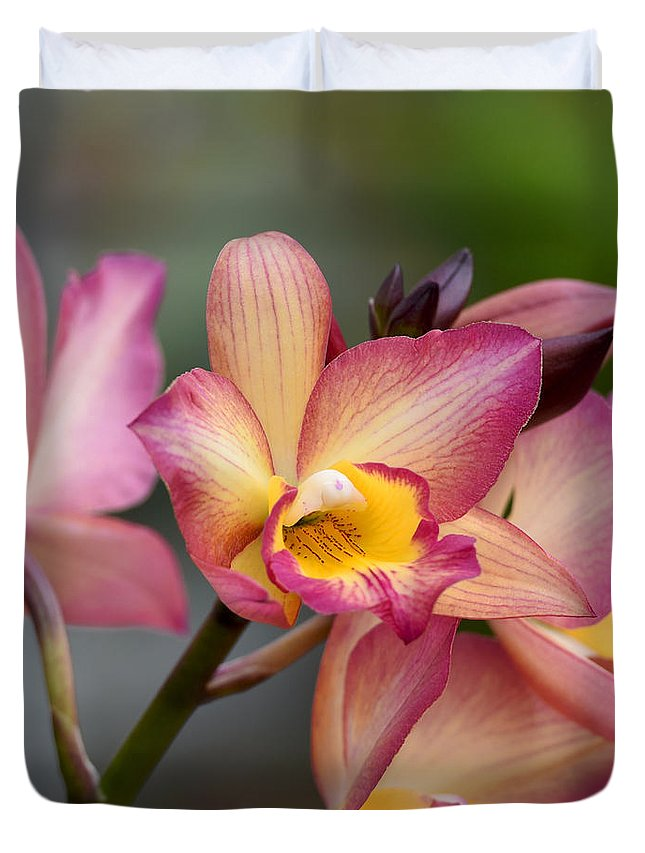 Orchid Duvet Cover featuring the photograph Iwanagara 9936 by Terri Winkler