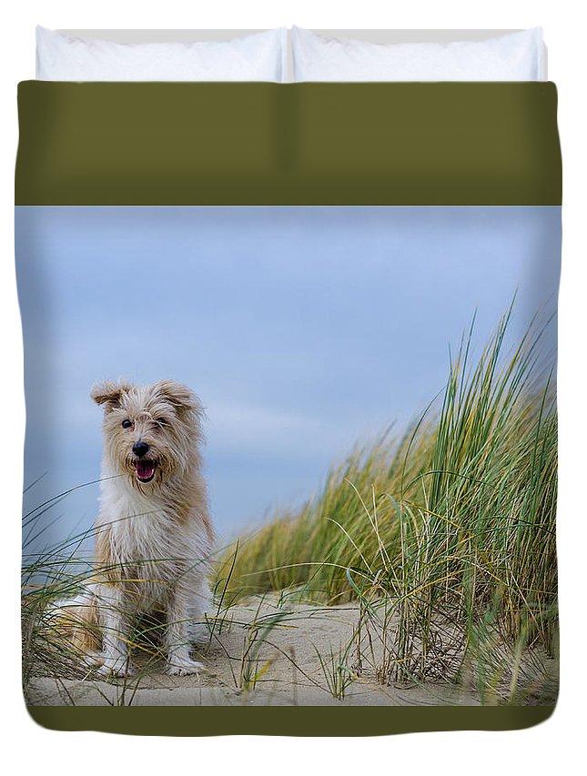 Beach Duvet Cover featuring the photograph Jack Russel Lotje by Jorick Van Gorp