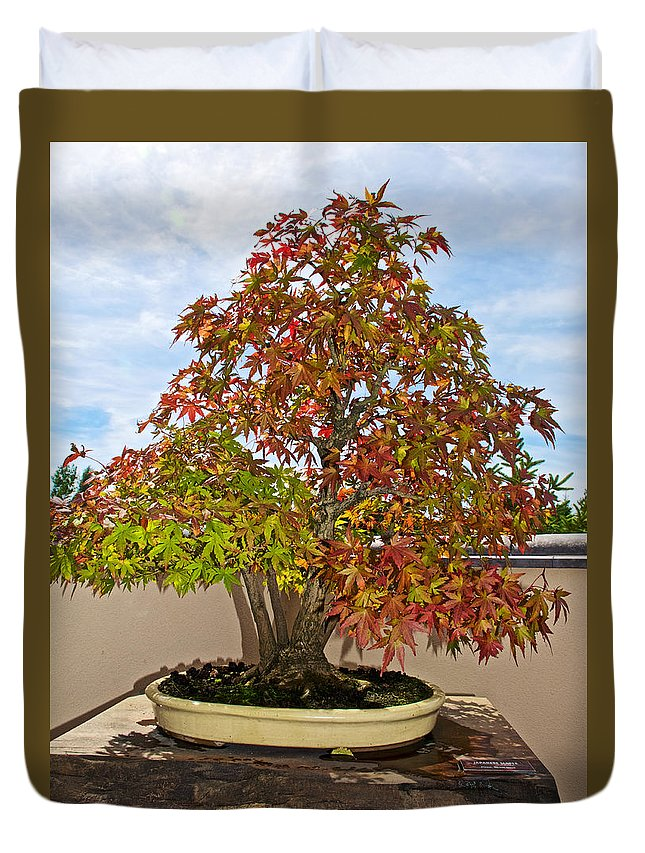 Japanese Maple Bonsai In Japanese Garden In Meijer Gardens In Grand Rapids Michigan Duvet Cover For Sale By Ruth Hager