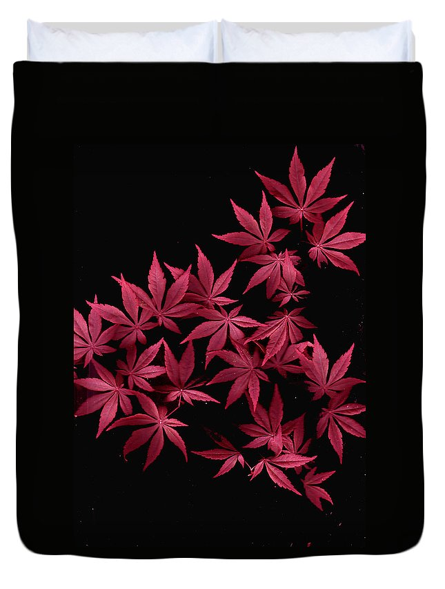 Japanese Maple Duvet Cover featuring the photograph Japanese Maple Leaves by Wayne Potrafka
