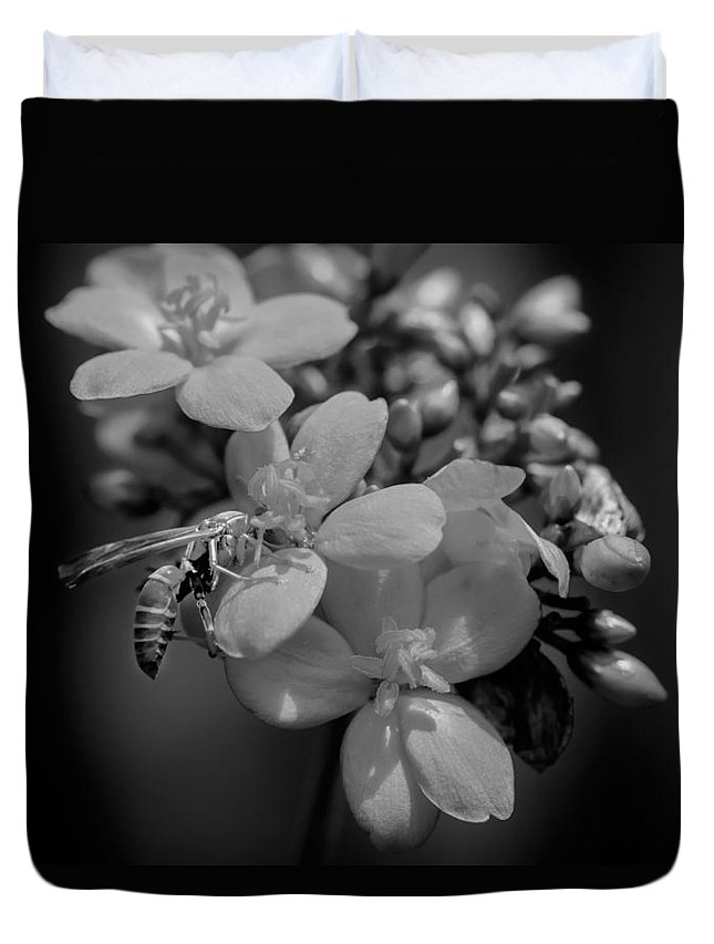 Jatropha Duvet Cover featuring the photograph Jatropha Blossoms Wasp Painted Bw by Rich Franco