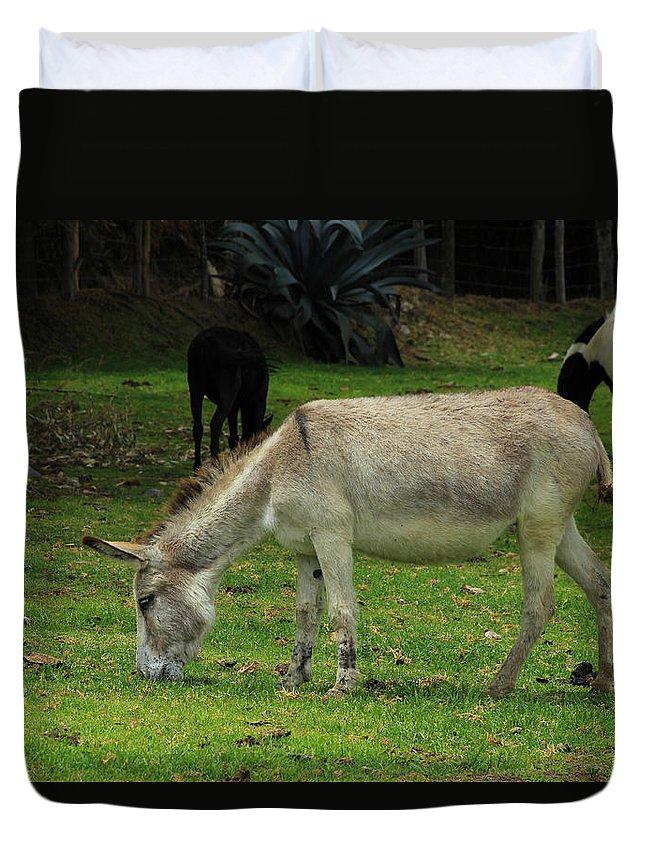 Jerusalem Donkey Duvet Cover featuring the photograph Jerusalem Donkey Grazing In A Field by Robert Hamm