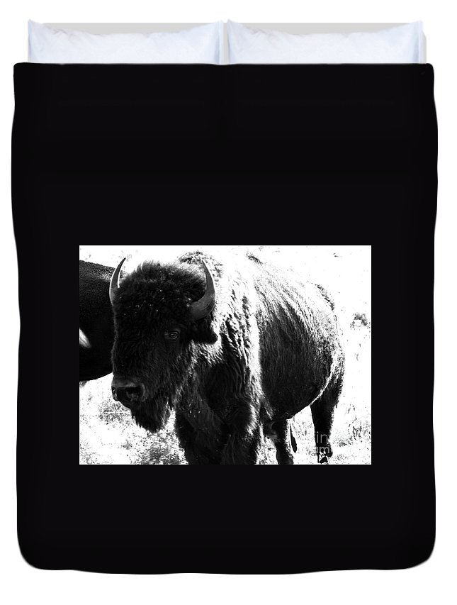 Buffalo Duvet Cover featuring the photograph Join The Party by Amanda Barcon