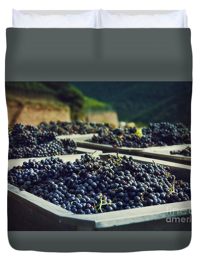 Germany Duvet Cover featuring the photograph Juicy Grapes Of Autumn. Rotwein Wanderweg by Katarjina Telesh